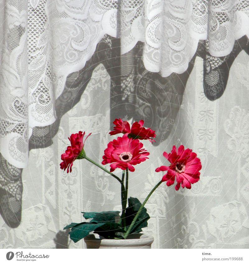 Boygroup Sonne Blume grün rot Freude Blatt Fenster hell Zusammensein Dekoration & Verzierung beobachten Stoff Blühend Falte Vorhang hängen