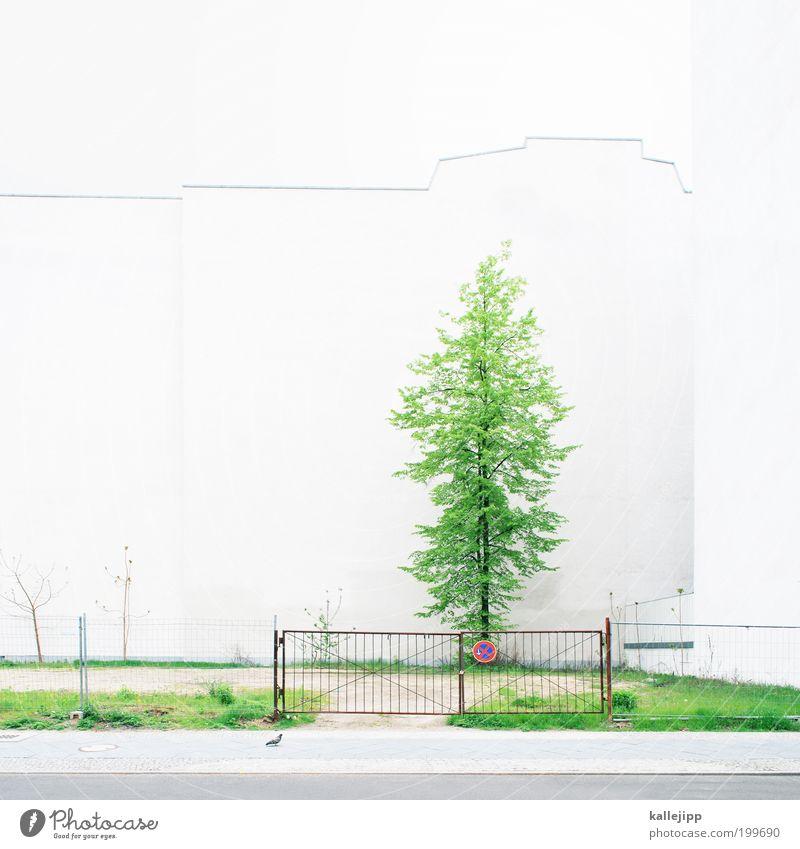 backyard weiß Baum Pflanze Haus Wiese Wand Gras Garten Mauer Wachstum Bürgersteig Tor Zaun Parkplatz Paradies Tür