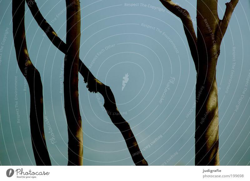 Buchen Himmel Natur blau Baum Pflanze Sommer Umwelt Küste Zufriedenheit Klima natürlich mehrere Wachstum Idylle Schönes Wetter Ast