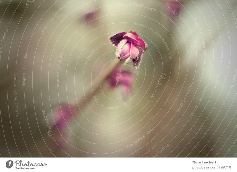 Die Farbe Lila Natur schön Pflanze Sommer Leben Blüte Frühling Garten Park Landschaft Zufriedenheit Stimmung Umwelt Zeit ästhetisch neu