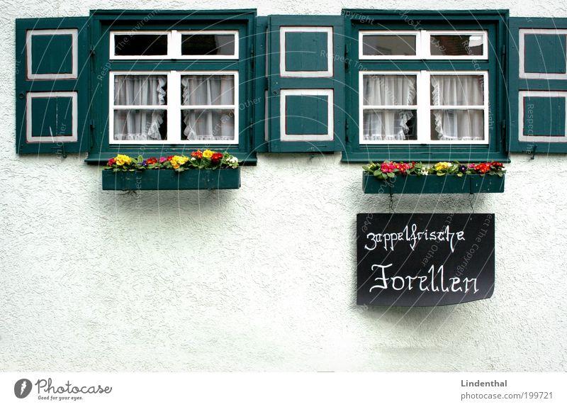 Zappelfrische Forellen weiß Haus Fenster hell Schilder & Markierungen frisch Werbung Tafel verkaufen Dorf Markt Fischereiwirtschaft Altstadt Fensterladen Gebäude Forelle