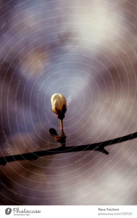 was zartes. Umwelt Natur Landschaft Pflanze Himmel Frühling Sommer Schönes Wetter Baum Sträucher Blüte Wildpflanze Ast Zweig Garten Park Blühend Wachstum frisch