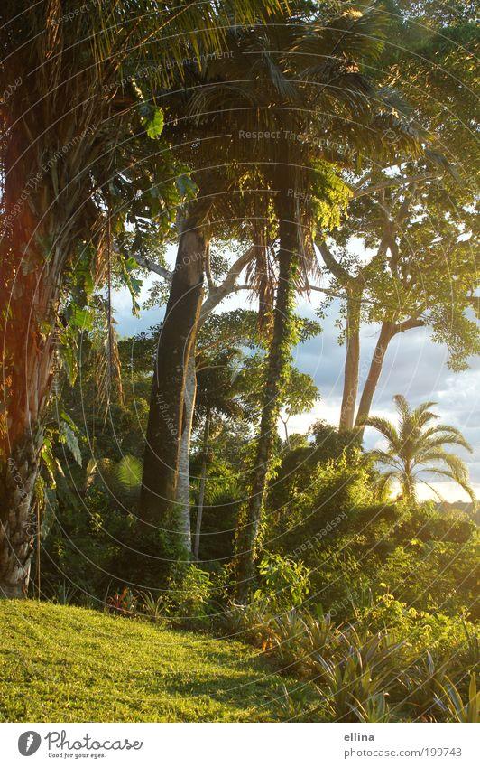 Dschungelparadies Natur Baum Ferien & Urlaub & Reisen Pflanze Sonne Sommer Ferne Umwelt Landschaft Freiheit Gras Glück Ausflug Tourismus Insel Sträucher