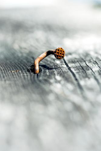 Dank Photocase das hier: Verrenkungen und andere komische Sachen Leben Nagel Holzbrett Nagelkopf Muster Metall Stahl Rost alt einzigartig Traurigkeit Sorge