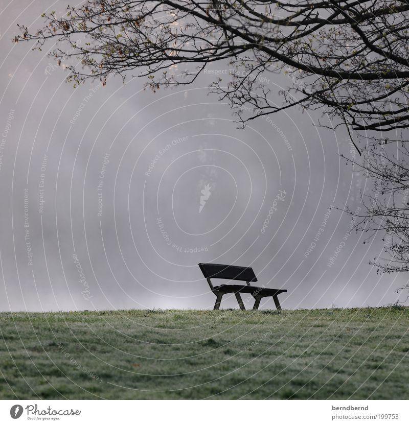 Parkbank Natur Baum Einsamkeit kalt Gras Traurigkeit Park Landschaft Stimmung Nebel trist Bank Romantik Vergänglichkeit Sehnsucht verlieren