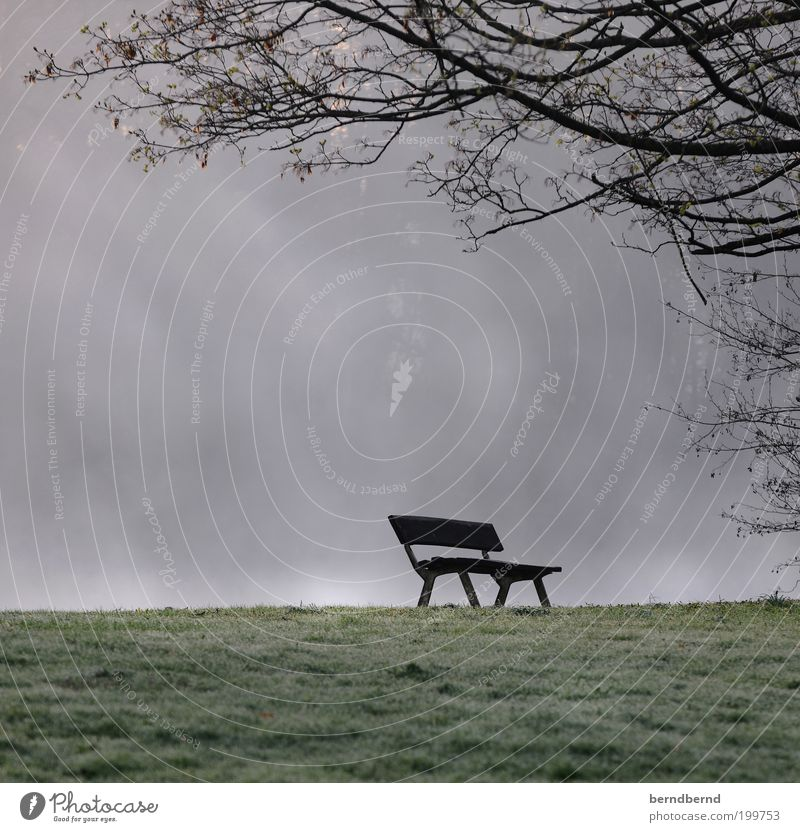 Parkbank Natur Landschaft Nebel Gras Stadtrand kalt trist Stimmung Romantik Sehnsucht Einsamkeit stagnierend Traurigkeit Vergänglichkeit verlieren Bank Baum