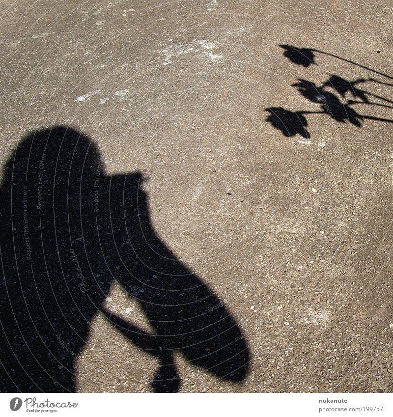 schattendasein Freizeit & Hobby Leben 1 Mensch Umwelt Sonnenlicht Schönes Wetter Blume Narzissen Beton braun grau schwarz Frühlingsgefühle Idee Asphalt