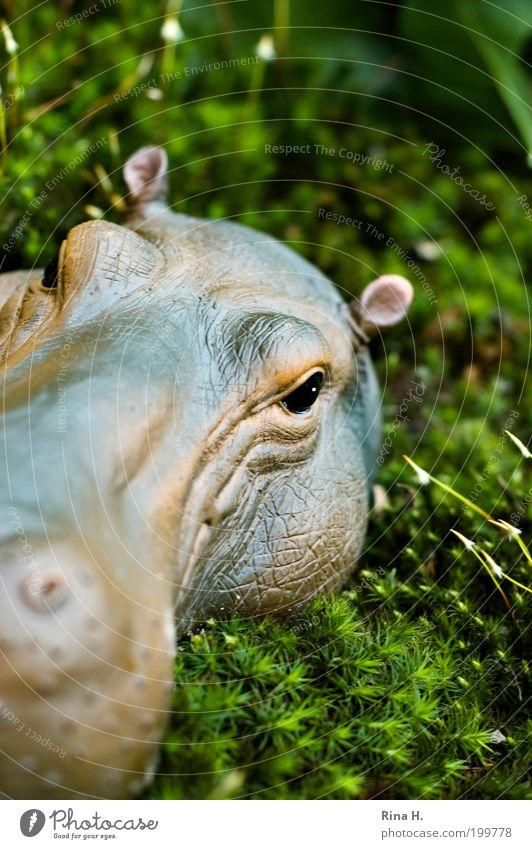 Hippo im Moos Natur grün Pflanze Tier Frühling Garten braun Kraft Kunst warten Umwelt groß gefährlich bedrohlich Kitsch