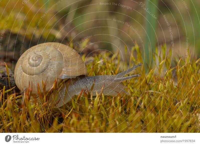 im Mooswald Tier Sonnenlicht Frühling Pflanze Wildtier Schnecke 1 Bewegung Blühend dehydrieren schleimig Schneckenhaus krabbeln Farbfoto Gedeckte Farben