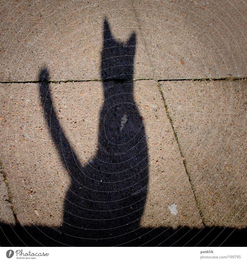 Miauuuuu Katze ästhetisch Schatten Mauer Wand grau schwarz Held Stolz Körperhaltung sitzen warten Pirsch Suche hocken Menschenleer Jagd elegant Farbfoto