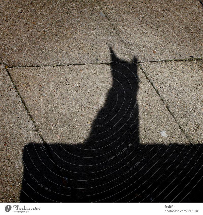 e Katze schön Tier schwarz Freiheit Mauer Zufriedenheit sitzen Macht beobachten Ohr einfach Schönes Wetter genießen Wachsamkeit Sonnenbad