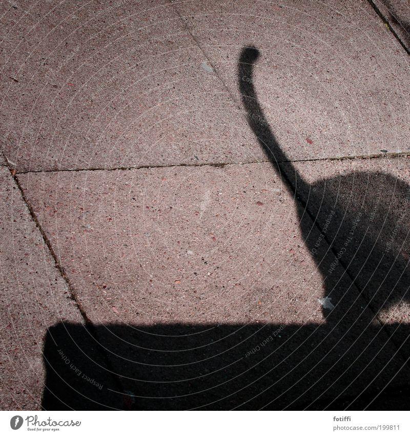 z Katze schön Tier schwarz Wand Mauer Stein gehen elegant wild Beton frei Fröhlichkeit Neugier Schönes Wetter Wachsamkeit