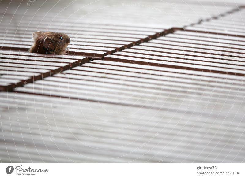 Maus, pass auf! schön Tier natürlich klein braun Angst Wildtier Geschwindigkeit niedlich Neugier Sicherheit Fell Wachsamkeit Terrasse Kontrolle