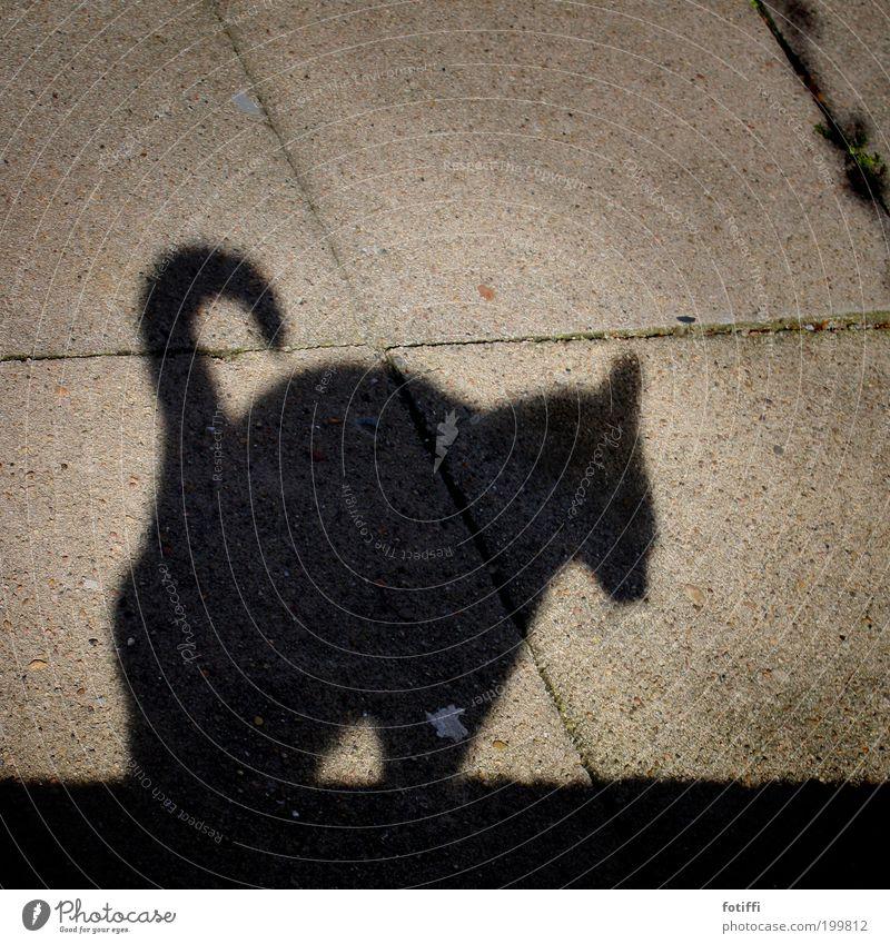 t Katze schön Tier ruhig schwarz Wand Stein Mauer Zufriedenheit elegant frei Beton niedlich Schönes Wetter Neugier Wachsamkeit