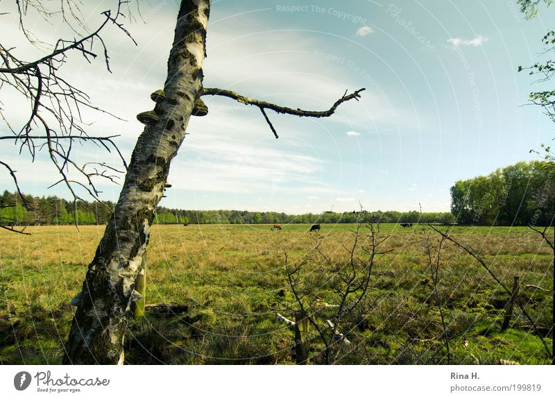 Landpartie Natur Himmel Baum grün Pflanze Ferne Wald Erholung Wiese Gras Frühling Landschaft authentisch natürlich Kuh