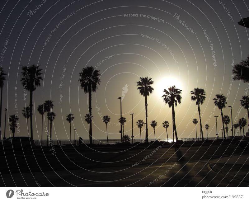 Huntington Beach, California Sonne Meer Sommer Strand Ferien & Urlaub & Reisen Ferne Freiheit Stimmung Tourismus Palme Sommerurlaub Sonnenuntergang