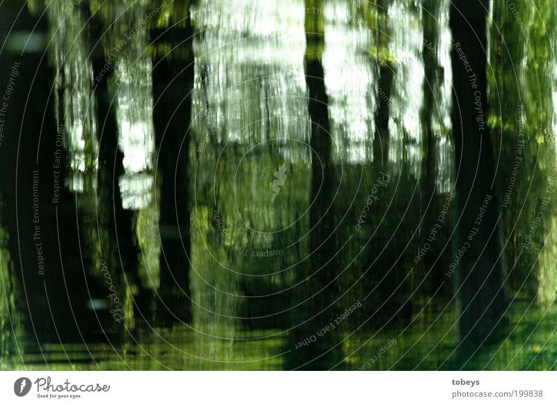 oil paint Natur Baum Wald Park Landschaft Umwelt Sträucher Urwald Gemälde Baumstamm unklar Verzerrung Licht Kunst Muster