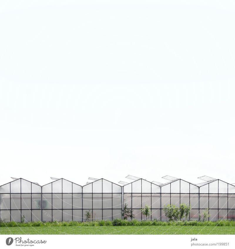 Großgärtnerei Arbeit & Erwerbstätigkeit Gartenarbeit Wirtschaft Landwirtschaft Forstwirtschaft Himmel Klima Pflanze Nutzpflanze Stadtrand Haus Bauwerk Gebäude