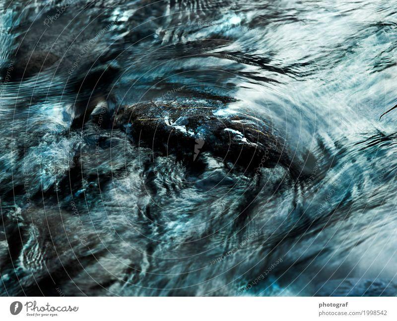 fluss Leben sprechen Kunst Natur Landschaft Pflanze Tier Luft Wasser Herbst Baum Wald See Bach Fluss Wasserfall Käfer Fisch Muschel Holz Wachstum erde boden