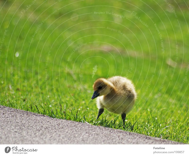 Links, rechts, links und los! Umwelt Natur Landschaft Pflanze Tier Frühling Klima Wetter Schönes Wetter Wärme Gras Park Seeufer Wildtier Vogel Tierjunges klein