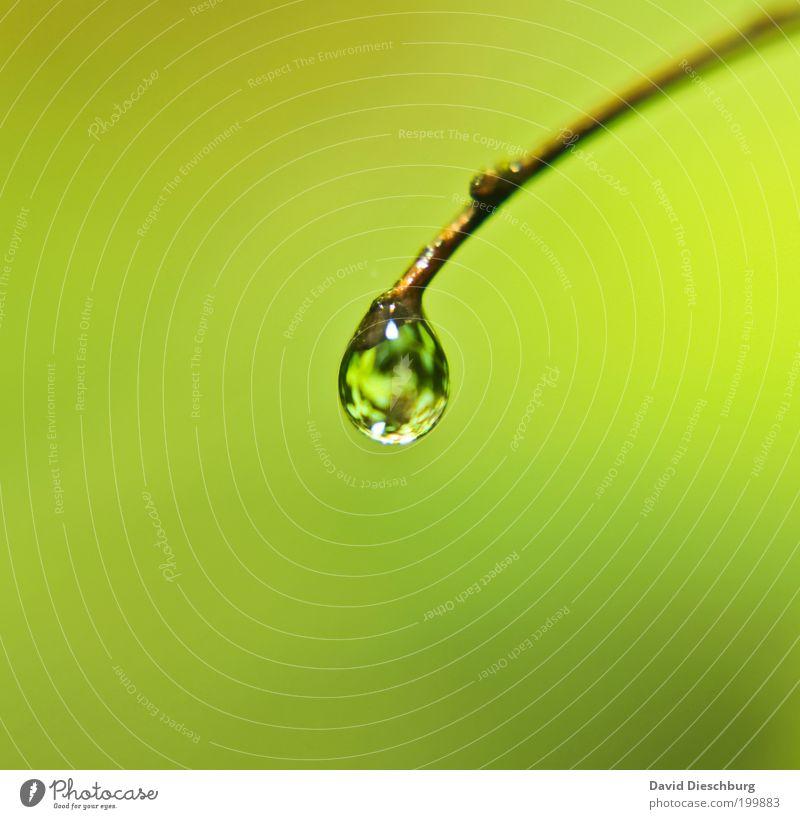 Rainy days - great pics Natur Pflanze grün Sommer ruhig Leben Frühling glänzend Wassertropfen einzeln rund Tropfen Zweig harmonisch Tau Wasserspiegelung