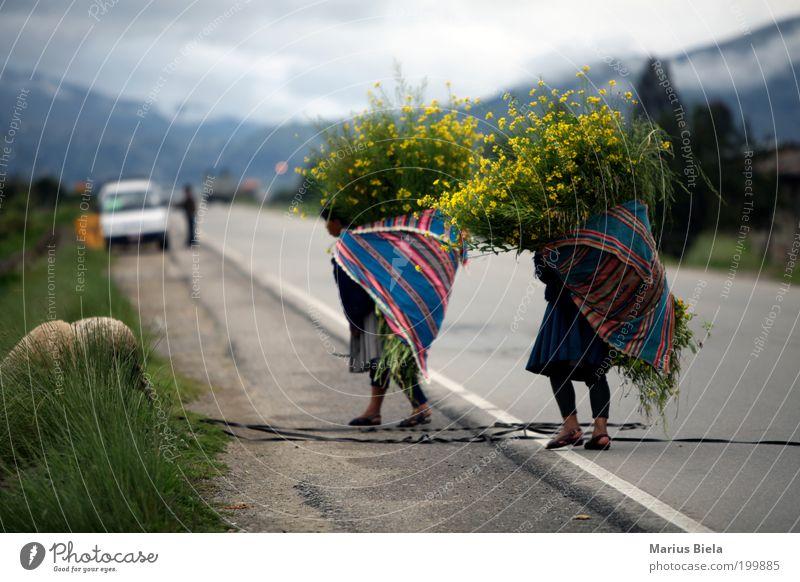 anstrengender Muttertag... Natur Blume Pflanze Ferien & Urlaub & Reisen gelb Straße Arbeit & Erwerbstätigkeit Blüte Straßenverkehr Nebel Bolivien Fell Gipfel