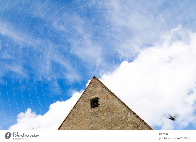 Eine Schwalbe Himmel blau weiß Sommer Tier Wolken Haus Fenster Leben Wand Wärme Mauer braun Vogel Fassade fliegen