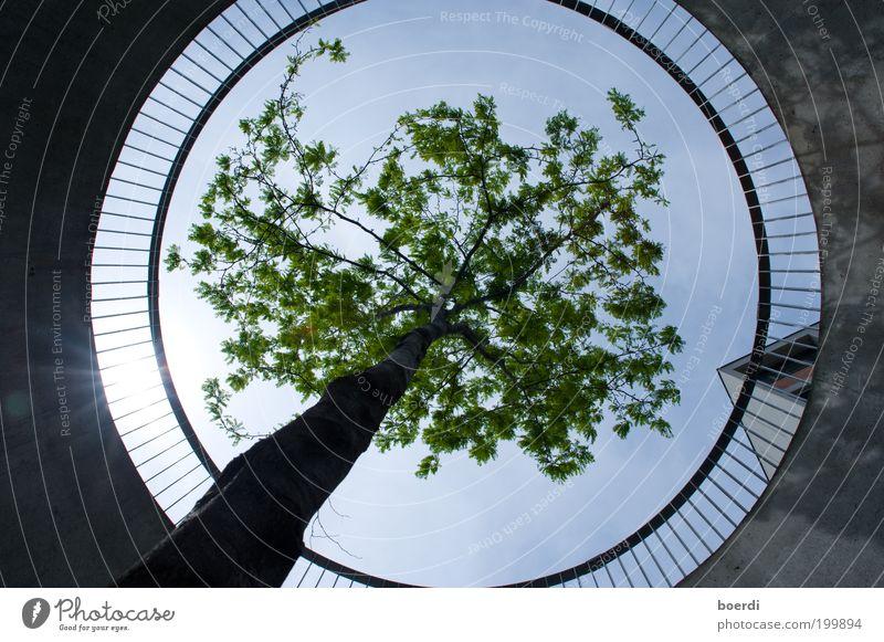 rEspekt Pflanze Baum Bauwerk Balkon Terrasse Geländer Betonwand Kreis kreisrund Loch Unendlichkeit nachhaltig unten Kraft Sicherheit Schutz Verantwortung
