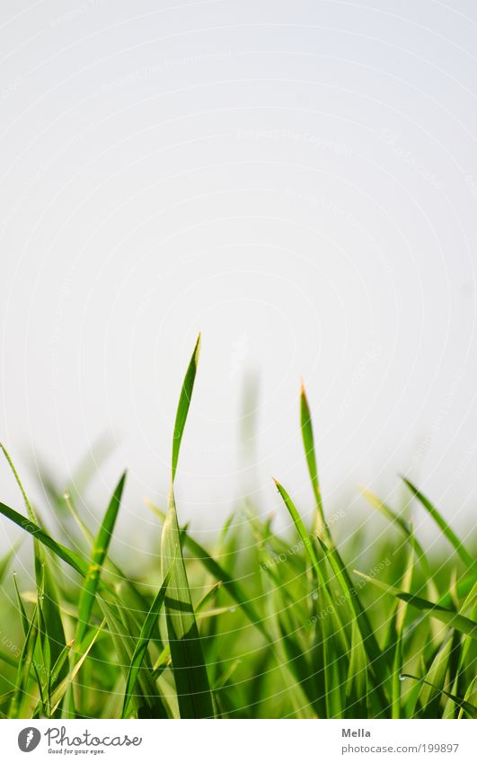 Ich hör das Gras wachsen Natur Himmel grün Pflanze Sommer Wiese Frühling Umwelt Wachstum nah natürlich unten Halm