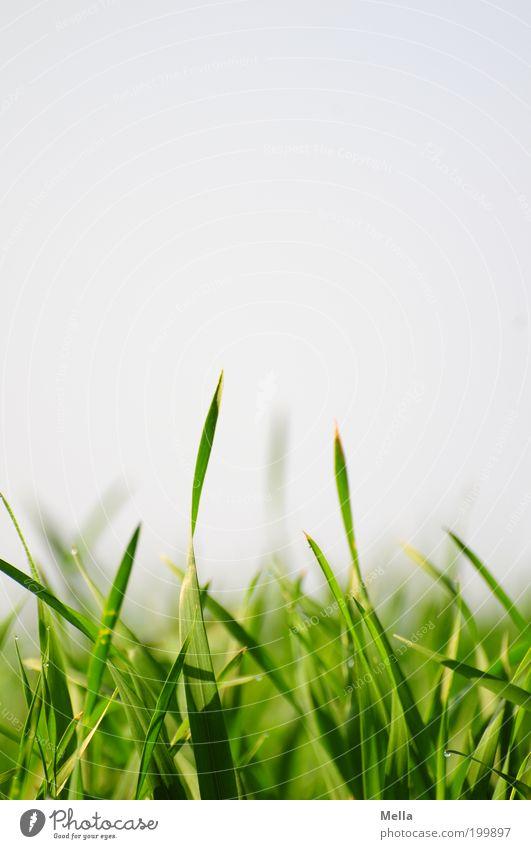 Ich hör das Gras wachsen Natur Himmel grün Pflanze Sommer Wiese Gras Frühling Umwelt Wachstum nah natürlich unten Halm