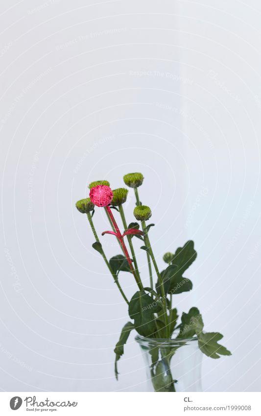 ein bisschen farbe Häusliches Leben Wohnung Dekoration & Verzierung Pflanze Blume Blatt Blüte Grünpflanze Farbstoff Vase ästhetisch außergewöhnlich einzigartig