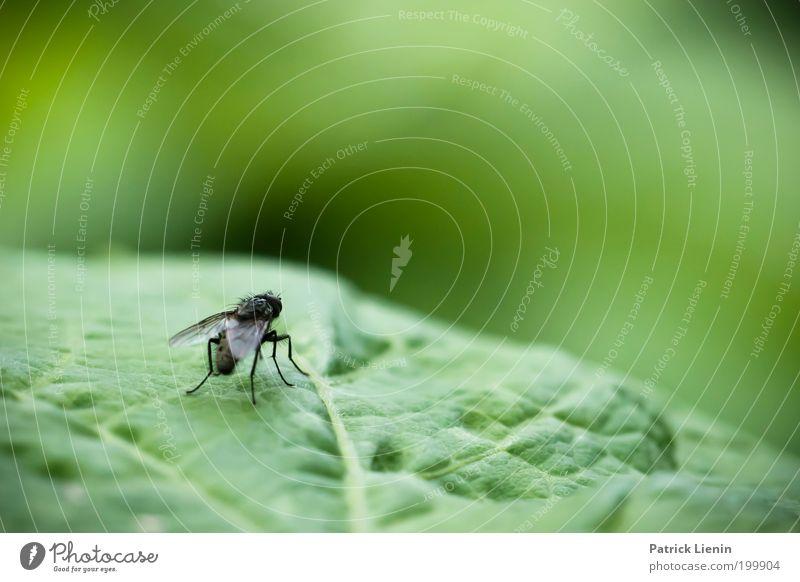Learning to fly Natur grün Pflanze Blatt Frühling Garten klein Fliege Umwelt Flügel Insekt