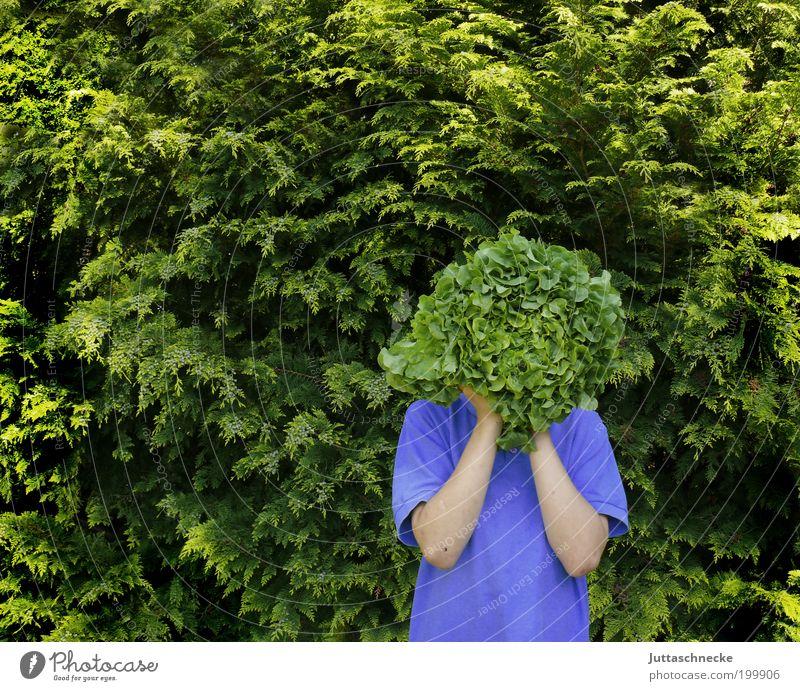 Kopfsalat Mensch Kind grün Sommer Ernährung Leben Junge Frühling Garten Gesundheit stehen Sträucher violett natürlich Kindheit