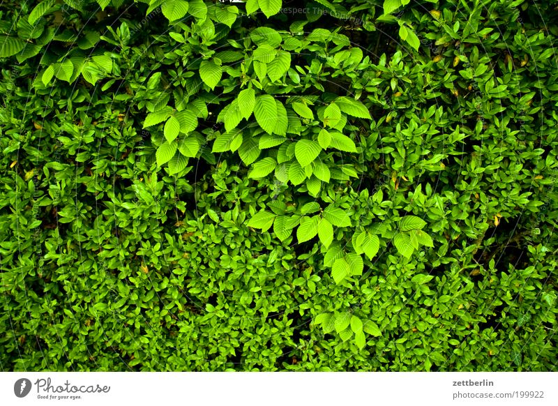 Kleine Blätter und mittlere Blätter Blatt grün Blattgrün Sauerstoff Hecke Erholung Versteck Frühling Unterholz Sichtschutz Erholungsgebiet Grünpflanze