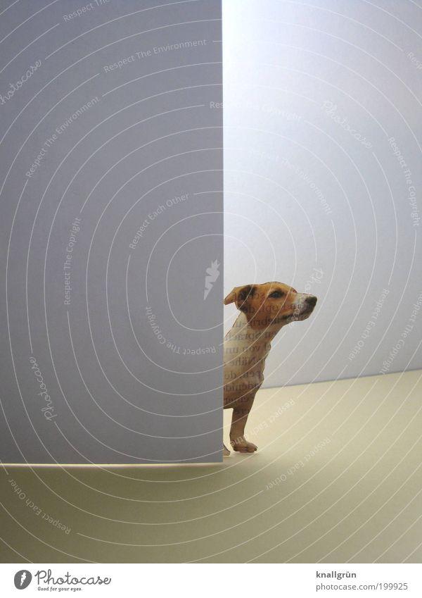 Neugier Mauer Wand Tür Tier Haustier Hund Terrier 1 beobachten stehen warten hell niedlich braun grau weiß Wachsamkeit Interesse entdecken Erwartung Hundeblick