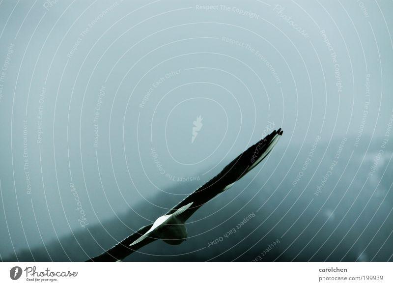 fallend. Tier Vogel 1 fliegen trist grau silber Gelassenheit ruhig Hoffnung Einsamkeit Möwe Sinkflug Nebel Farbfoto Gedeckte Farben Außenaufnahme Menschenleer