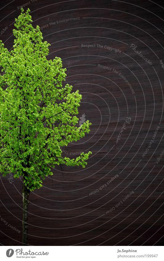 Baum vor Wand - Expo Hannover grün Pflanze Holz Mauer Gebäude Zufriedenheit braun Perspektive