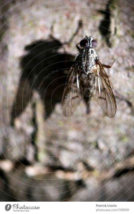pretty fly Natur schön Baum ruhig Tier Umwelt klein Flügel Insekt durchsichtig Baumrinde geduldig kleben Fliege Detailaufnahme Facettenauge