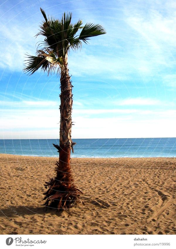 Palm Beach Baum Meer Strand Ferien & Urlaub & Reisen See Sand Europa Spanien Palme Barcelona