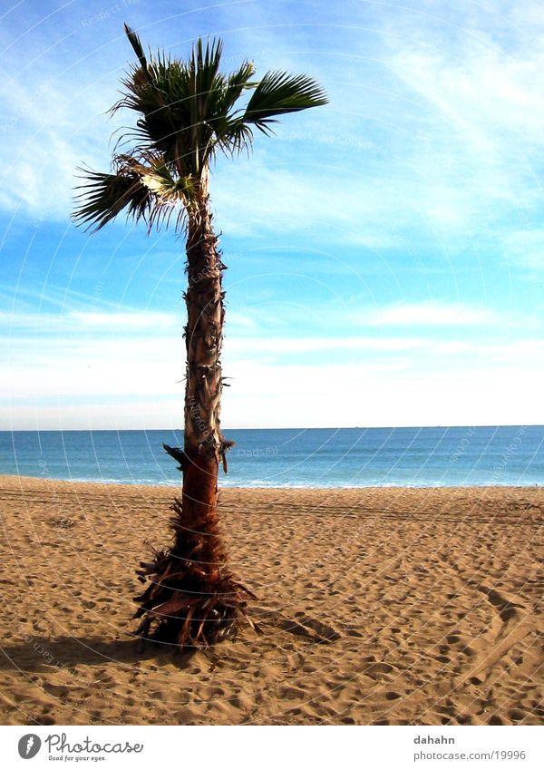 Palm Beach Palme Baum Strand Meer Spanien Ferien & Urlaub & Reisen See Barcelona Europa Sand