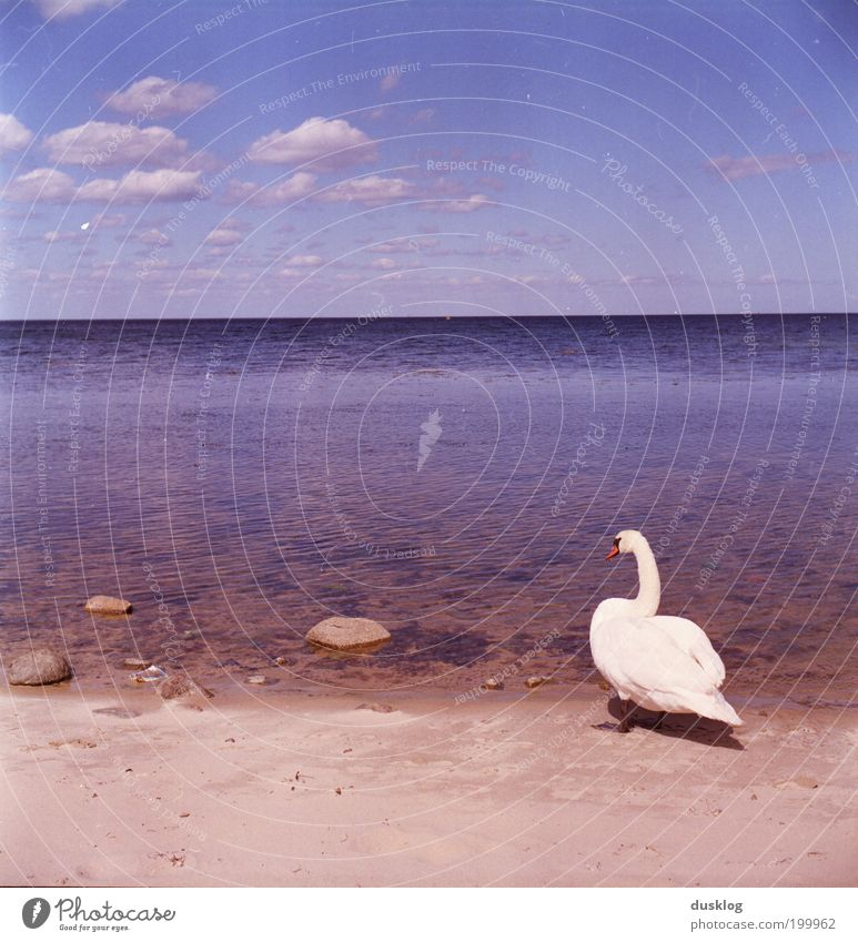 Endlich mal am Meer Natur Wasser schön Himmel weiß blau Sommer Strand Ferien & Urlaub & Reisen Wolken Tier Erholung träumen Stein Zufriedenheit