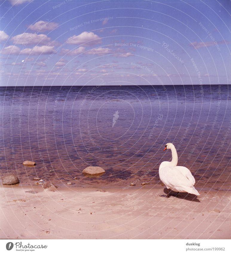 Endlich mal am Meer Natur Wasser schön Himmel weiß Meer blau Sommer Strand Ferien & Urlaub & Reisen Wolken Tier Erholung träumen Stein Zufriedenheit