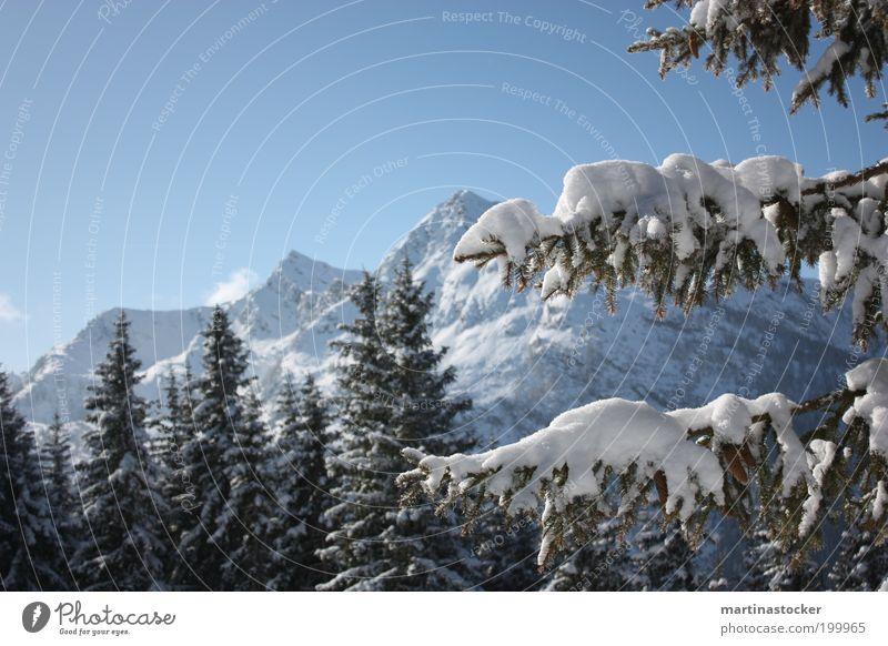 Wintertraum Natur schön Himmel weiß Baum blau Winter Ferne Wald Schnee Berge u. Gebirge träumen Landschaft Umwelt Aussicht Ast