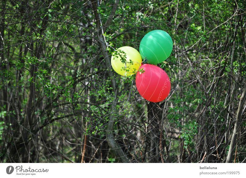 Happy Birthday, Fotoline! Umwelt Natur Pflanze Frühling Schönes Wetter Baum Sträucher gelb grün rot Luftballon mehrfarbig Dekoration & Verzierung Farbfoto