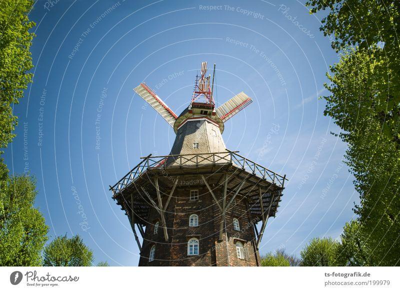 Don Quijotes Mittagspause III Natur alt Baum Sommer Ferien & Urlaub & Reisen Erholung Frühling Holz Architektur Wind Technik & Technologie Idylle Bauwerk drehen