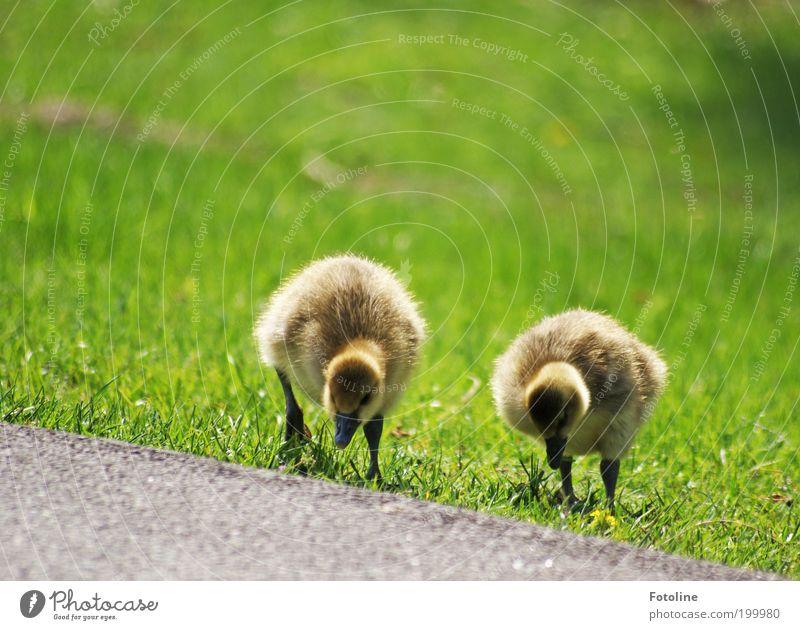 Happy Birthday Bellaluna! Natur Pflanze Landschaft Tier Umwelt Tierjunges Wärme Wiese Frühling Gras gehen 2 Vogel Luft Park Wetter