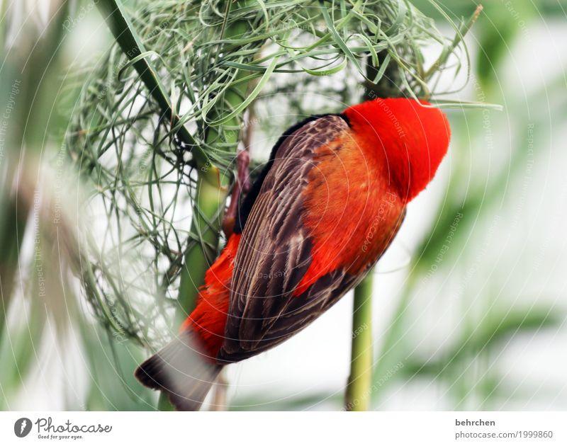 häuslebauer Natur Ferien & Urlaub & Reisen Pflanze schön Tier Ferne Gras klein außergewöhnlich Freiheit Tourismus Vogel fliegen Ausflug Wildtier Sträucher
