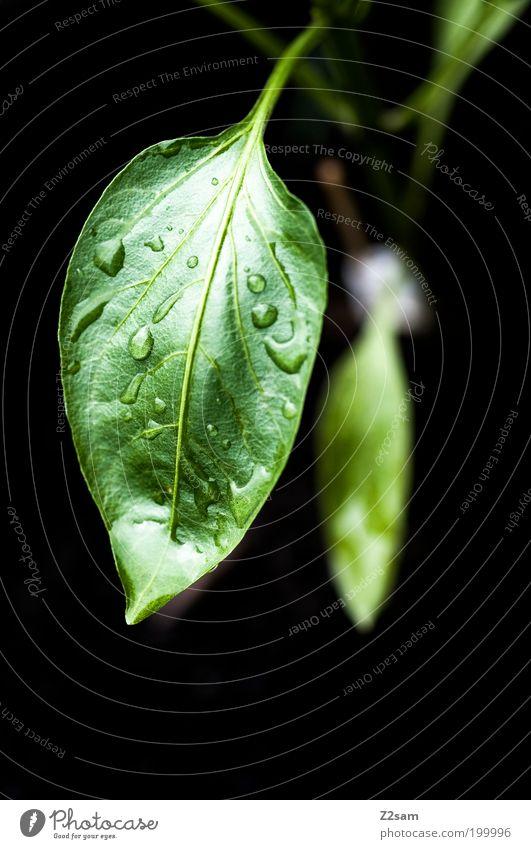 Einzelgänger Natur grün Pflanze Blatt schwarz dunkel Stil Garten Regen Landschaft Gesundheit elegant Umwelt Wassertropfen nass frisch
