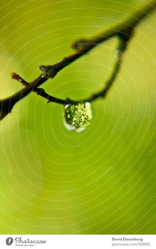 Am seidenen Ast Leben harmonisch ruhig Natur Pflanze Wassertropfen Frühling Sommer grün silber weiß glänzend nass dünn Farbfoto Außenaufnahme Nahaufnahme