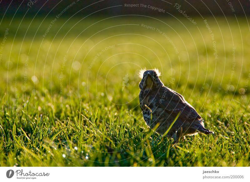 ...Mami?! Natur Einsamkeit Tier Wiese Gras Frühling Garten Park Kraft Vogel klein Wachstum Rasen bedrohlich Feder